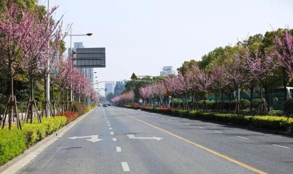 河岸绿化景观_道路景观绿化设计图_道路绿化景观