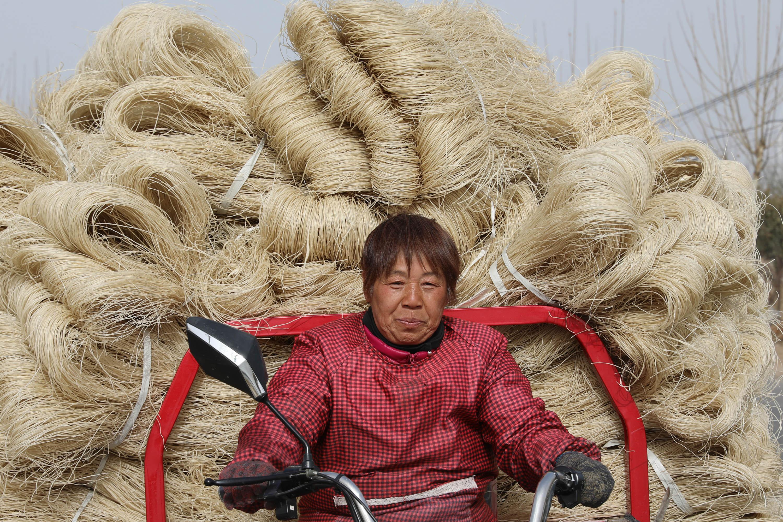 1月13日,河南省焦作市温县黄庄镇南韩村村民在装运晾干的粉条。