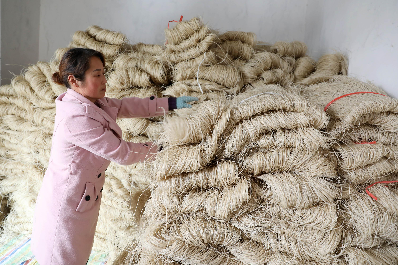 1月13日,河南省焦作市温县黄庄镇南韩村村民在整理待售的粉条。