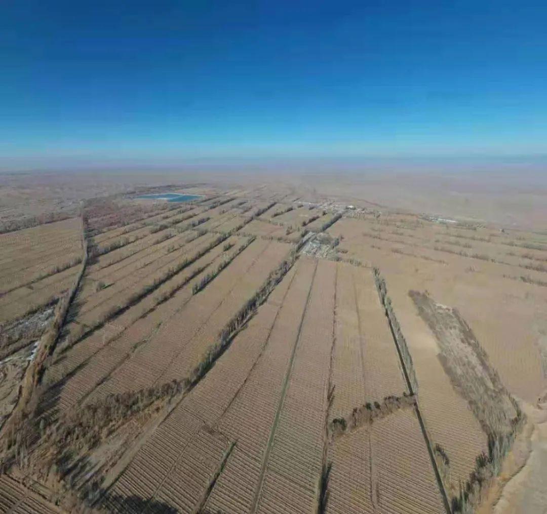 """图为近十余年来,阳关林场持续遭遇大面积""""剃光头""""式的砍伐,万余亩公益防护林在刀砍锯伐中所剩无几。(当地志愿者航拍)"""