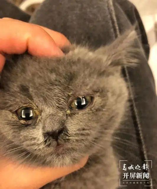 收到的小猫看起来病恹恹的