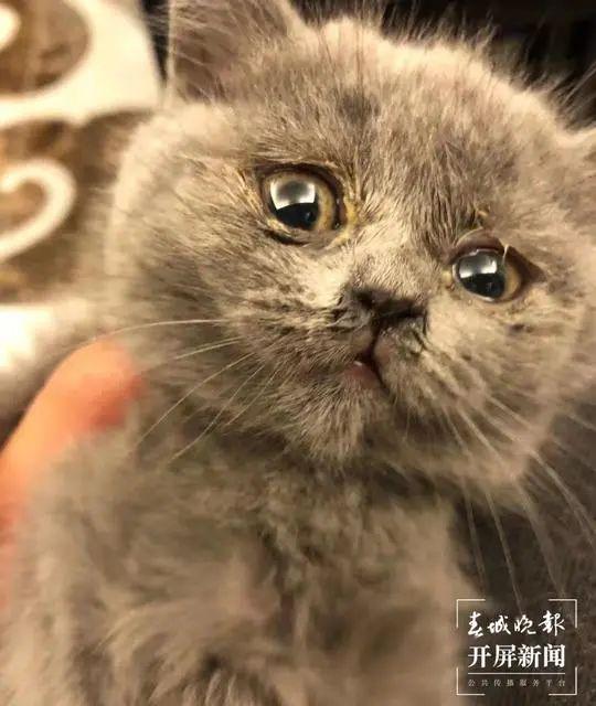 体检出猫癣,眼睛流脓红眼圈