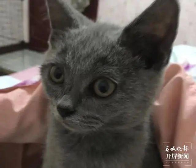 治疗后的小猫看起来精神好多了