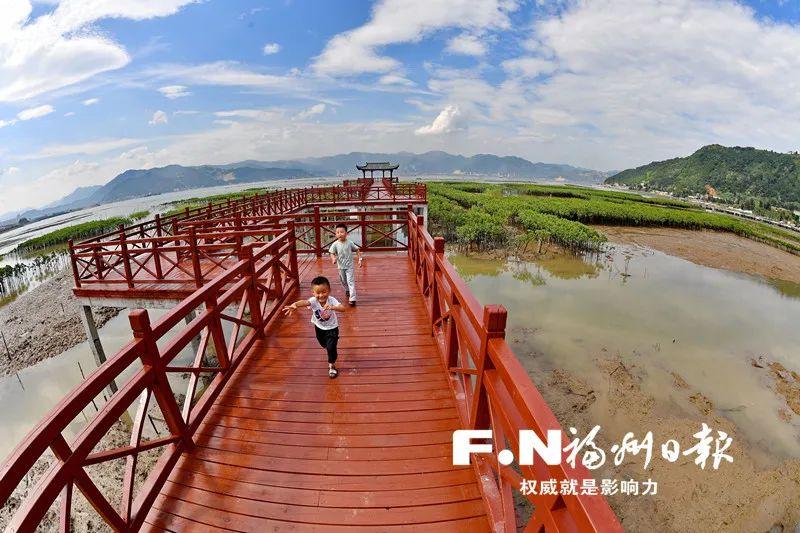 """图5 """"山海福建""""罗源湾红树林 来源:福州新闻网"""