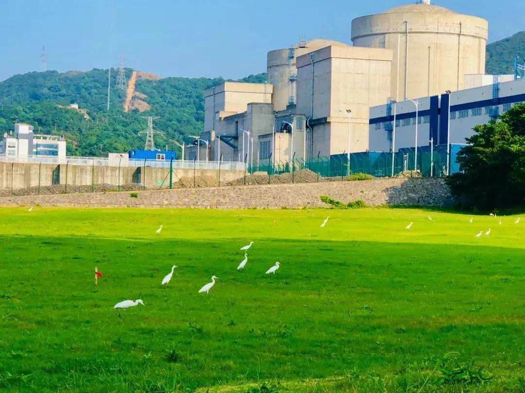 聚焦碳中和|机遇期稍纵即逝,核能规模化发展和科技创新需同步推进_政务_澎湃新闻-The Paper