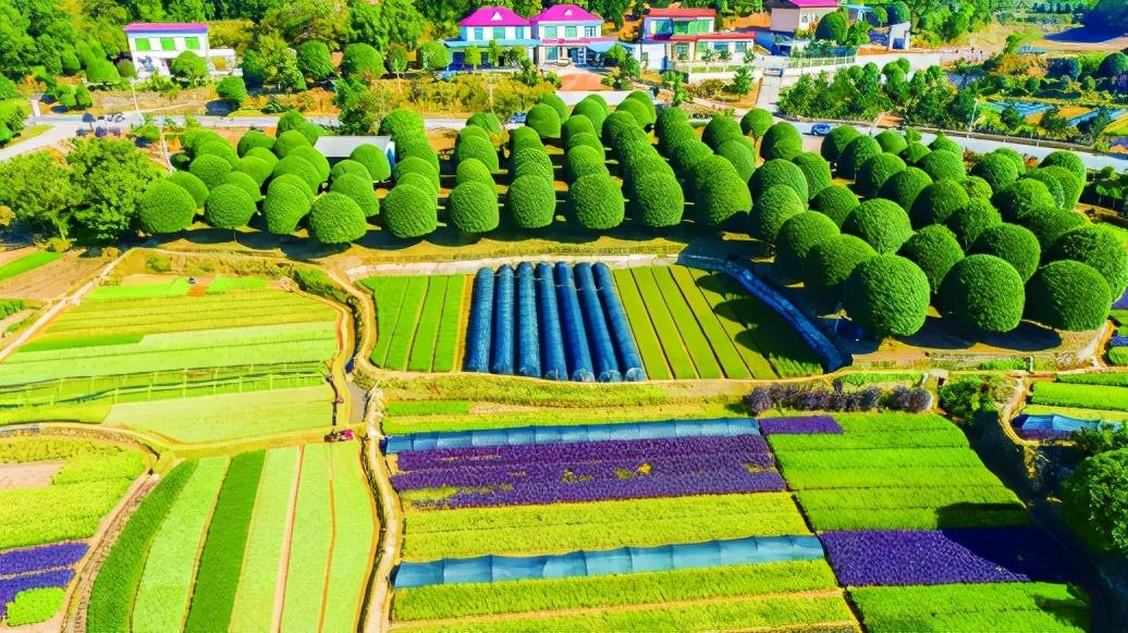三仙岭村的杯苗种植如今已成产业化