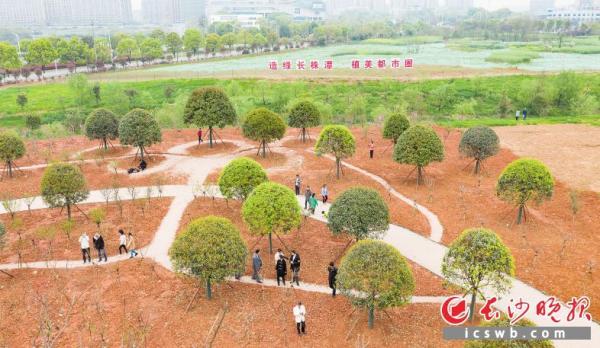 长株潭三市融城核心区天心区融城公园,众多市民在此游玩拍照。