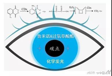 图1 碳点在鲁米诺和过氧草酸酯体系中化学发光示意图