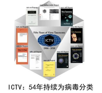ssc15期单双计划软件