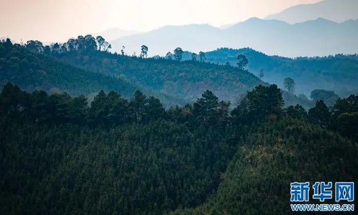 im体育:最美林业故事|父与子的传承:六十余载守望绿水青山