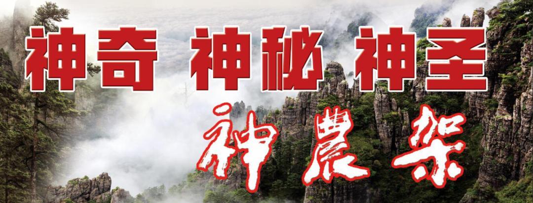 来欣赏,摄影师陈金武镜头中的神农架_政务_澎湃新闻-ThePaper