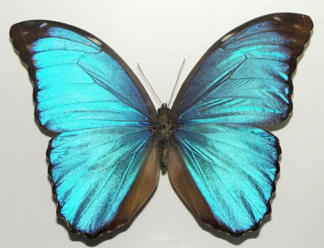 蝴蝶的形态结构特征和主要生活习性_学识网