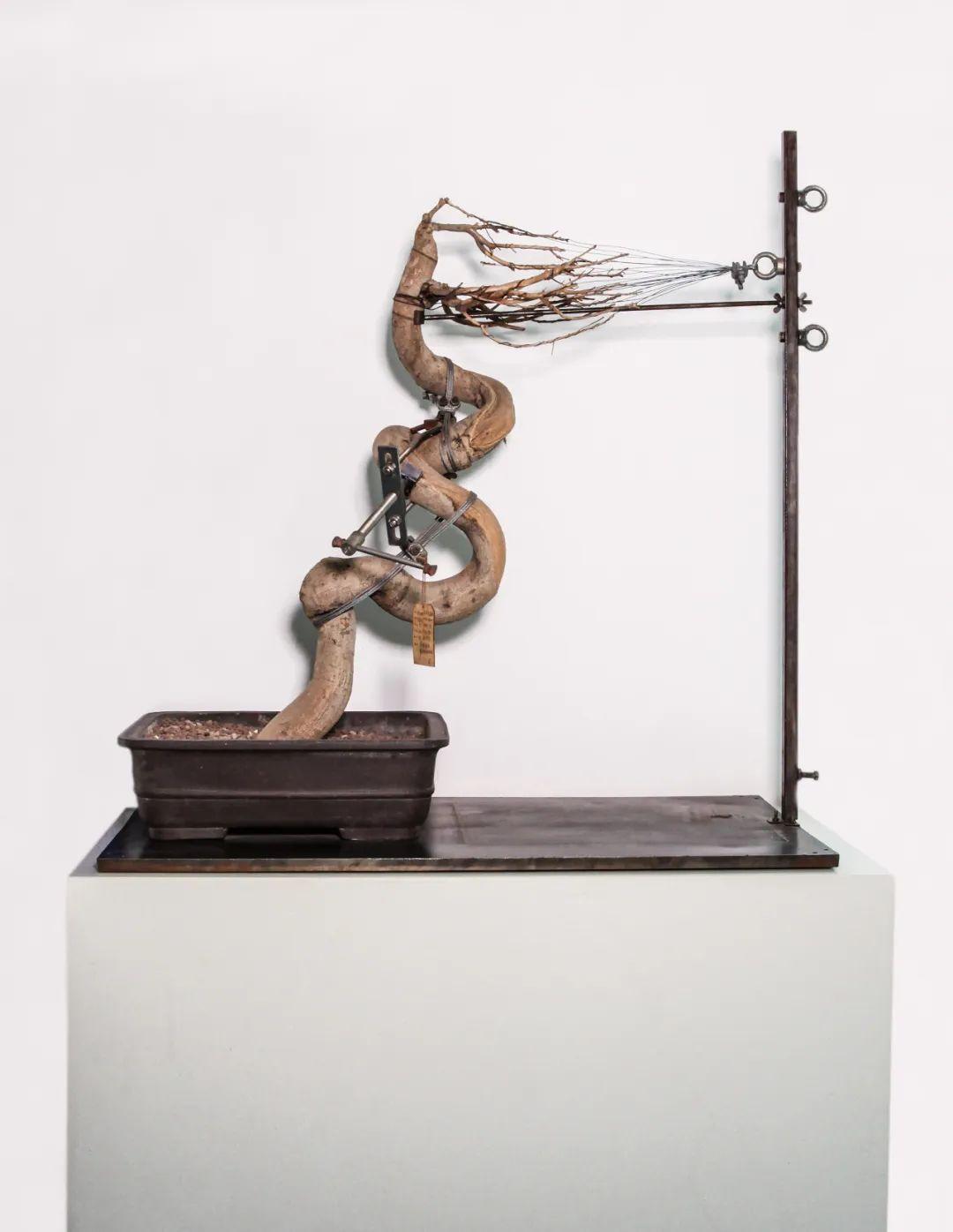 沈少民,《盆景6 号》(2007),植物、铁,私人收藏。图片由艺术家和奕来画廊提供