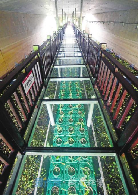 长约50米的玻璃栈道亮相印象济南·泉世界西侧的腊山河畔