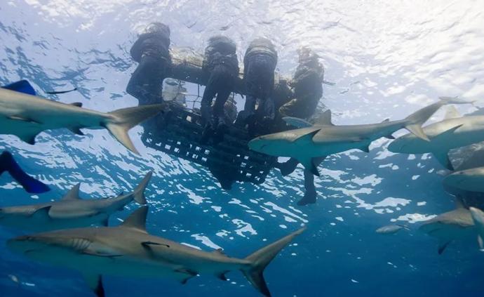 史上最惨烈鲨鱼吃人案,军舰沉没后数百名落水士兵被肢解蚕食
