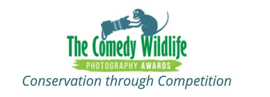 谁是今年动物界的喜剧之王?喜剧野生动物摄影奖公布入围名单
