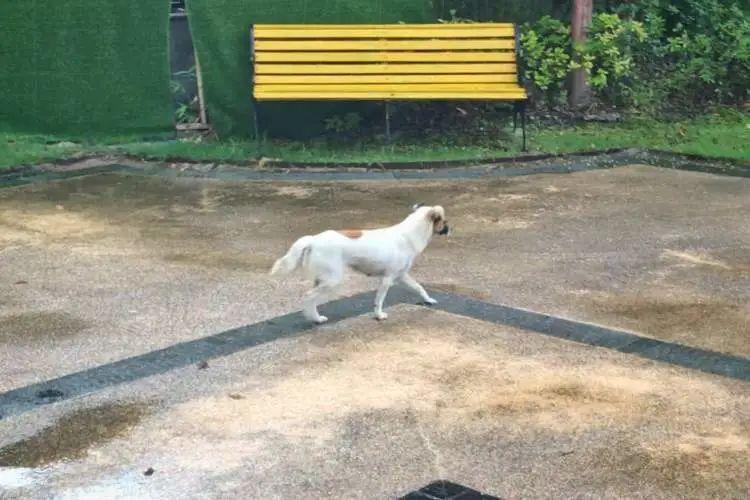 △事发后,依然有未戴狗链的狗在小区内散步