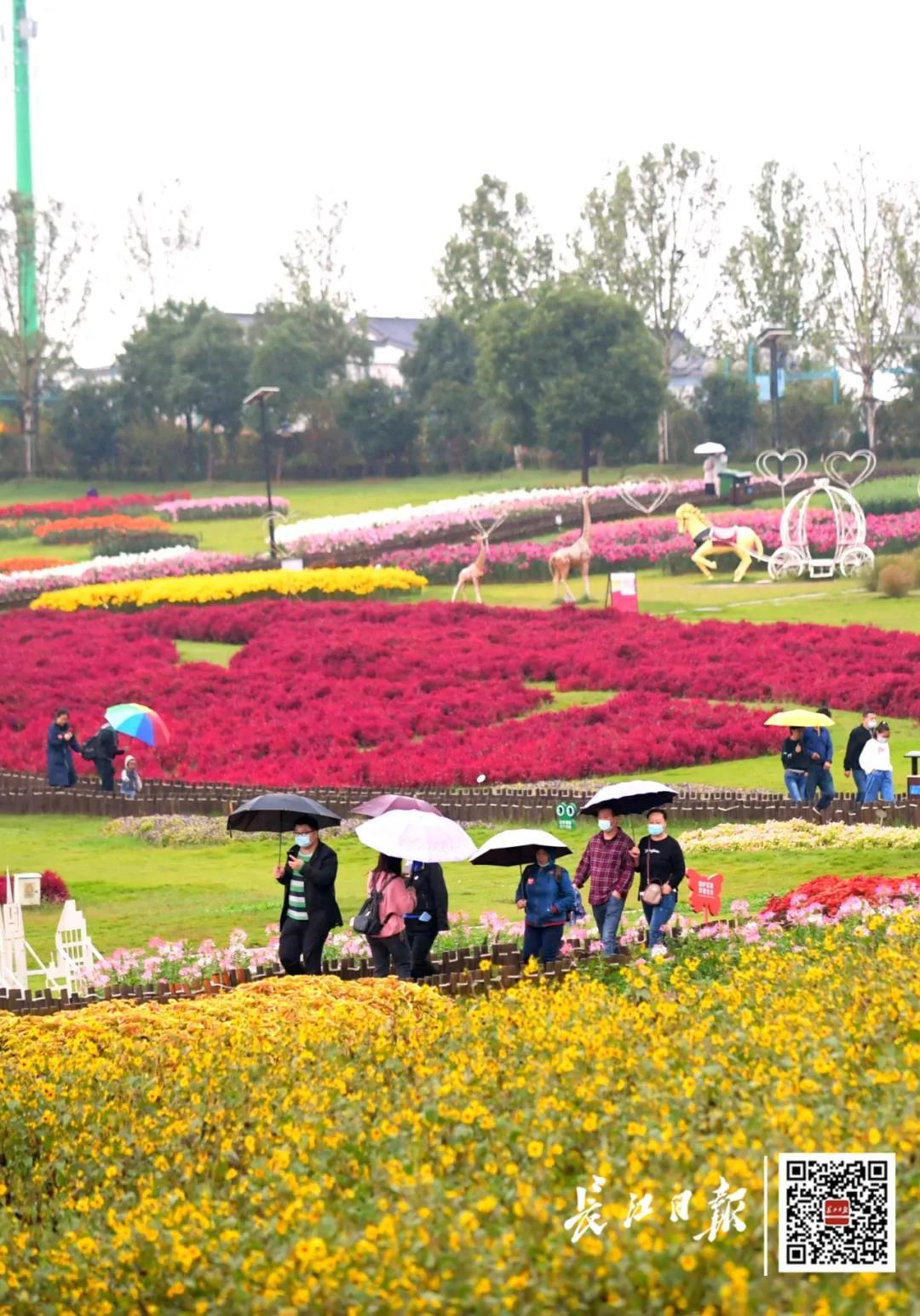 10月3日,吸引众多游人撑着雨伞逛武汉花博汇景区。记者刘斌 摄