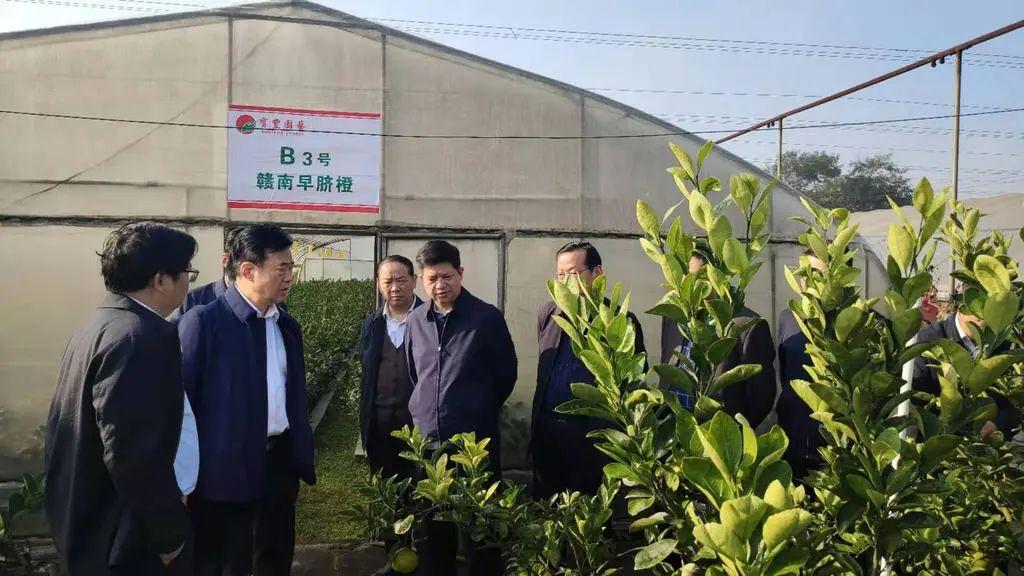 湖南省农业农村厅厅长袁延文来新宁调研脐橙财产及村落生长工作